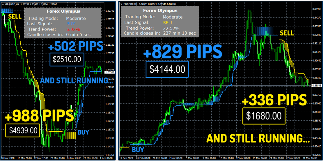 Forex Olympus Results screenshot