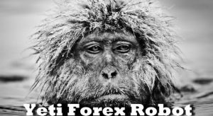 Yeti Forex Robot Review